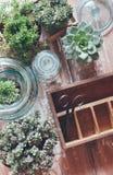 Plantas da casa Imagens de Stock
