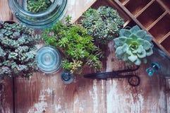 Plantas da casa Foto de Stock