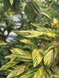 Plantas da casa da borboleta Fotos de Stock