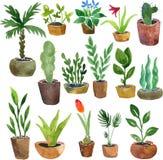 Plantas da casa do desenho da aquarela Fotos de Stock