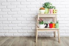 Plantas da casa, plantas carnudas Fotografia de Stock