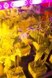 Plantas da casa verde Imagens de Stock