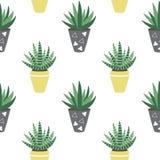 Plantas da casa verde no hawor amarelo e cinzento do sansevieria dos potenciômetros Imagens de Stock Royalty Free