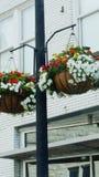 Plantas da cidade Imagem de Stock Royalty Free