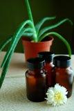Plantas da cura Foto de Stock Royalty Free