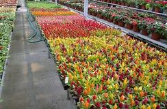 Plantas da flor imagens de stock royalty free