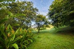 Plantas da flor do gengibre em uma exploração agrícola tropical em Porto Rico Imagens de Stock Royalty Free