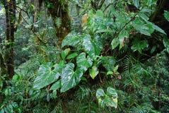 Plantas da floresta úmida Imagem de Stock