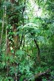 Plantas da floresta úmida Imagens de Stock Royalty Free