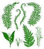 Plantas da floresta Foto de Stock Royalty Free
