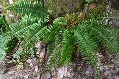 Plantas da floresta fotografia de stock royalty free