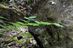 Plantas da floresta imagem de stock royalty free