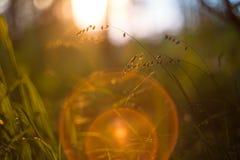 Plantas da floresta e do prado no por do sol com bokeh bonito da luz alaranjada e do fundo Imagem macro com profundidade de campo fotografia de stock royalty free