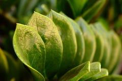 Plantas da folha Fotografia de Stock Royalty Free