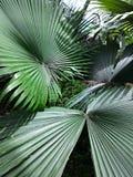 Plantas da folha no jardim Imagens de Stock Royalty Free