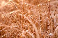 Plantas da foto congeladas pela geada Imagem de Stock Royalty Free