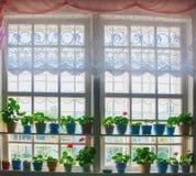 Plantas da janela em uma janela Fotografia de Stock