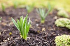 Plantas da mola Fotografia de Stock Royalty Free