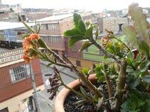 Plantas da natureza da beleza foto de stock