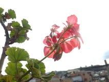 Plantas da natureza da beleza Fotos de Stock