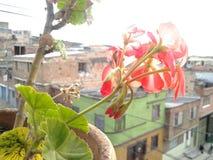 Plantas da natureza da beleza Fotografia de Stock