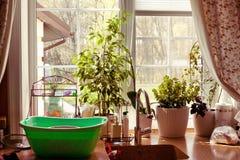 Plantas da opinião do jardim da janela da cozinha Fotos de Stock