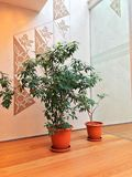 Plantas da sala de espera Foto de Stock Royalty Free