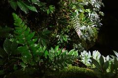 Plantas da samambaia na pedra Imagens de Stock Royalty Free
