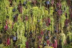 plantas da samambaia nos potenciômetros de flor, parede vertical do jardim interno em gard Fotografia de Stock