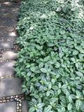 Plantas da vegetação rasteira Foto de Stock Royalty Free