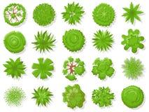 Plantas da vista superior Árvores tropicais, árvore da planta verde de cima para mapa aéreo da coleção isolada do vetor ilustração royalty free
