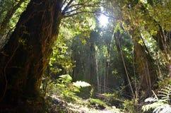 Plantas das florestas úmidas temperadas de Valdivian no Patagonia do sul do chileno do Chile imagens de stock