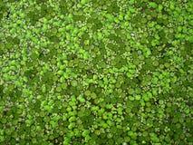 Plantas de Acuatic Foto de Stock Royalty Free