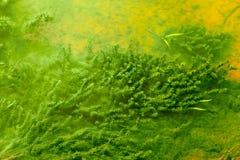 Plantas de agua Foto de archivo libre de regalías