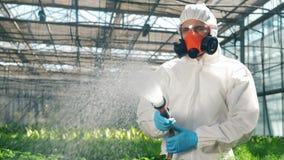 Plantas de aguas de un hombre de una manguera mientras que trabaja en un invernadero almacen de metraje de vídeo
