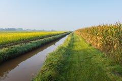 Plantas de amadurecimento do milho e da colza de forragem Fotos de Stock Royalty Free