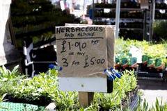 Plantas de arrasto do Lobelia para a venda imagem de stock