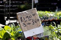Plantas de arrasto do Lobelia para a venda imagens de stock