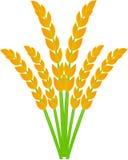Plantas de arroz ilustração royalty free