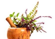 Plantas de Ayurveda Foto de archivo libre de regalías