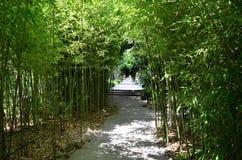Plantas de bambu em torno da estrada Foto de Stock Royalty Free