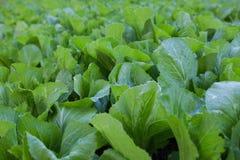 Plantas de berçário Imagens de Stock