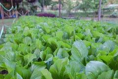 Plantas de berçário Imagem de Stock