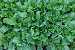 Plantas de berçário Imagens de Stock Royalty Free