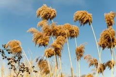 Plantas de Brown no parque imagens de stock royalty free