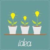 Plantas de bulbo de lámpara en los potes. Estante de madera. Concepto cada vez mayor de la idea libre illustration