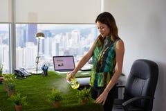 Plantas de Business Woman Watering da ecologista no escritório empresarial Fotografia de Stock