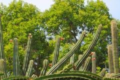 Plantas de Catcus Foto de archivo