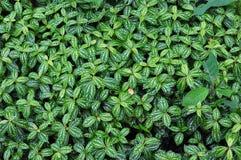 Plantas de colheita. Foto de Stock Royalty Free