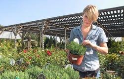 Plantas de compra fotografia de stock royalty free